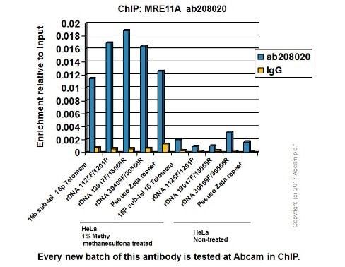 ChIP - Anti-Mre11 antibody [EPR21027] - ChIP Grade (ab208020)