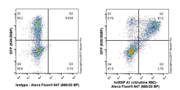 Flow Cytometry - Anti-hnRNP A1 (citrulline R92) antibody [EPR20174] (ab208026)