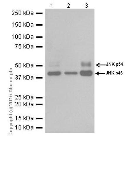 Western blot - Anti-JNK1+JNK2+JNK3 antibody [EPR18841-95] (ab208035)