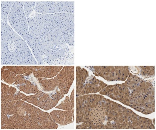 Immunohistochemistry (Formalin/PFA-fixed paraffin-embedded sections) - Anti-IL-6 antibody (ab208113)