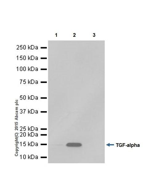Immunoprecipitation - Anti-TGF alpha antibody [EPR15346] (ab208156)