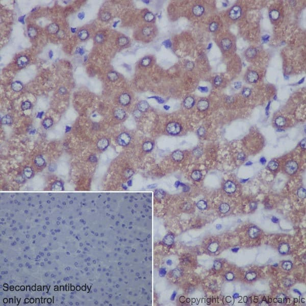 Immunohistochemistry (Formalin/PFA-fixed paraffin-embedded sections) - Anti-TGF alpha antibody [EPR15346] (ab208156)