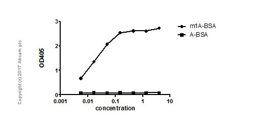 ELISA - Anti-1-methyladenosine (m1A) antibody [EPR-19836-208] (ab208196)