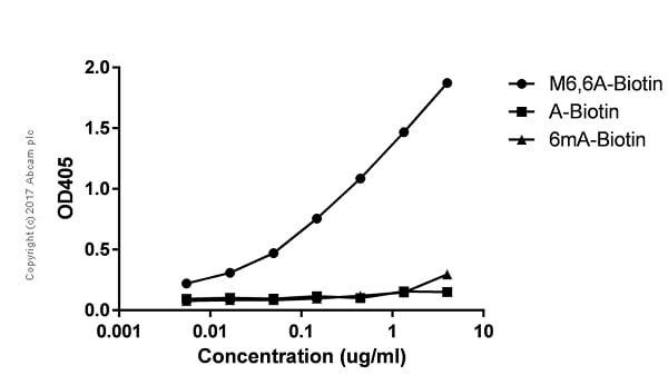 ELISA - Anti-N6, N6-dimethyladenosine (m6,6A) antibody [EPR- 19831-44] (ab208198)