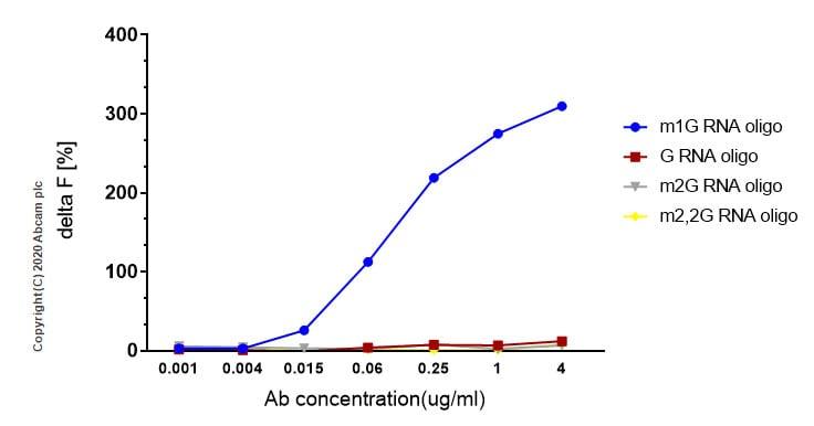 Homogeneous plate-based assay - Anti-1-methylguanosine (m1G) antibody [EPR19833-150] (ab208199)