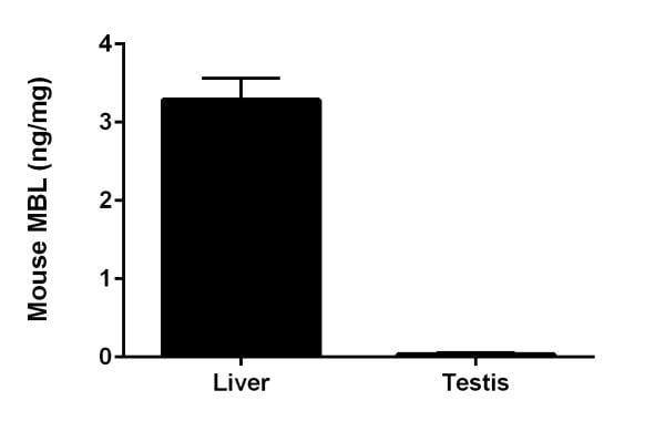 Interpolated concentrations of native MBL in mouse liver and testis extract samples