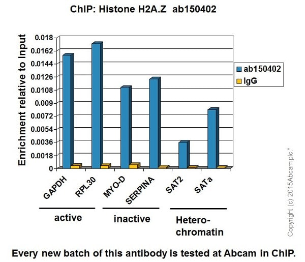 ChIP - Anti-Histone H2A.Z antibody [EPR6171(2)(B)] - BSA and Azide free (ab208691)