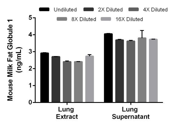 Interpolated concentrations of native Milk Fat Globule 1 in mouse lung tissue extract sample based on a 125 µg/mL extract load and lung tissue culture (day 5) supernatant samples (40%).
