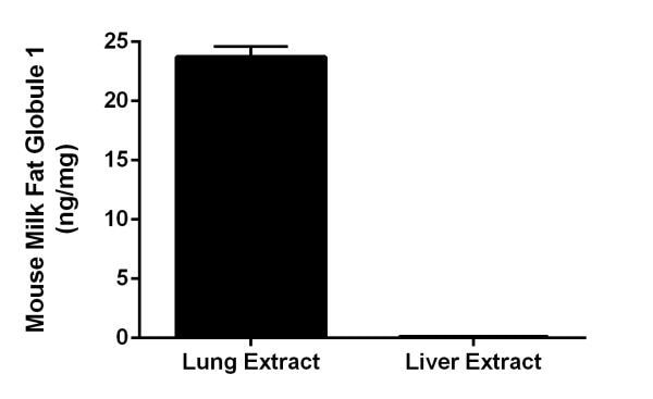 Interpolated concentrations of native Milk Fat Globule 1 in mouse lung and liver extract samples.