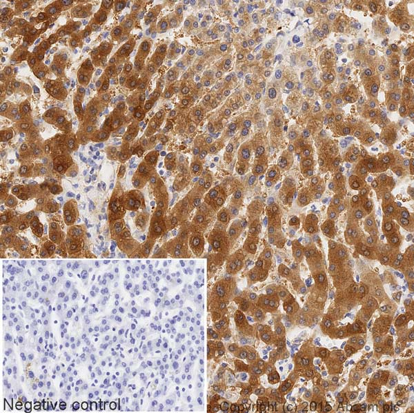 Immunohistochemistry (Formalin/PFA-fixed paraffin-embedded sections) - Anti-ASS1 antibody [EPR12398] (HRP) (ab209018)