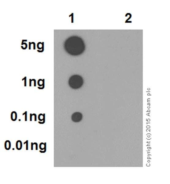 Dot Blot - Anti-RIP3 (phospho S227) antibody [EPR9627] (ab209384)