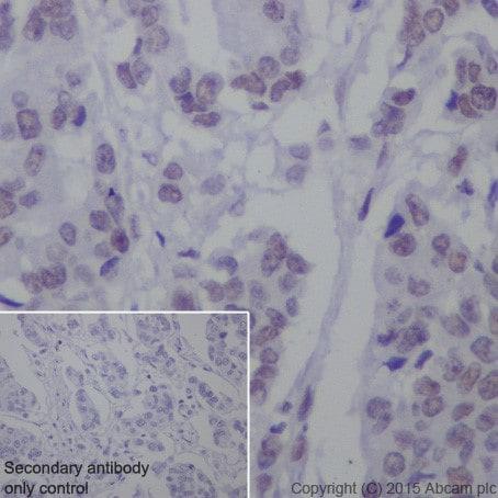 Immunohistochemistry (Formalin/PFA-fixed paraffin-embedded sections) - Anti-SF3B3 antibody [EPR18440] (ab209402)