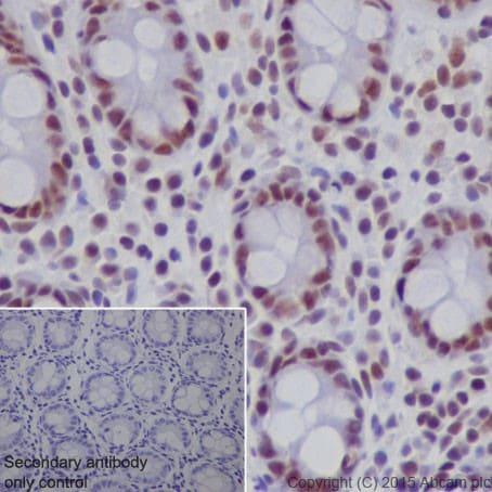 Immunohistochemistry (Formalin/PFA-fixed paraffin-embedded sections) - Anti-SF3B3 antibody [EPR18441] (ab209403)