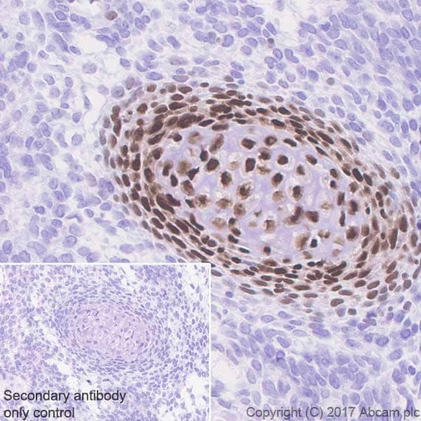 Immunohistochemistry (Formalin/PFA-fixed paraffin-embedded sections) - Anti-Sp7 / Osterix antibody [EPR21034] (ab209484)