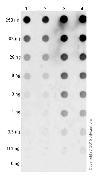 Dot Blot - Anti-Alpha-synuclein aggregate antibody [MJFR-14-6-4-2] - Conformation-Specific (ab209538)