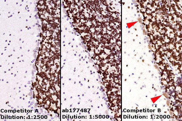Immunohistochemistry (Formalin/PFA-fixed paraffin-embedded sections) - Anti-NeuN antibody [EPR12763] - BSA and Azide free (ab209898)