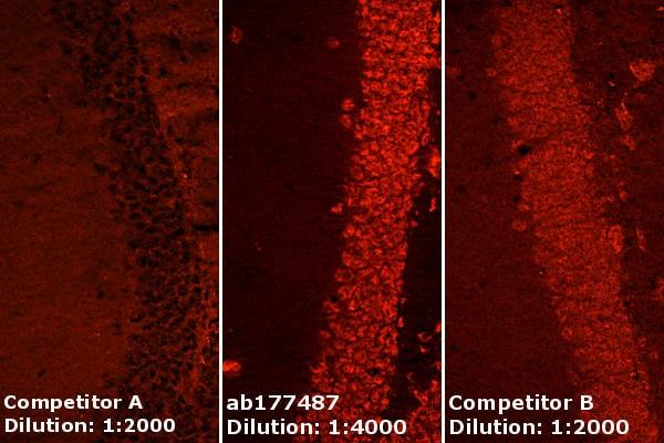 Immunohistochemistry (Frozen sections) - Anti-NeuN antibody [EPR12763] - BSA and Azide free (ab209898)