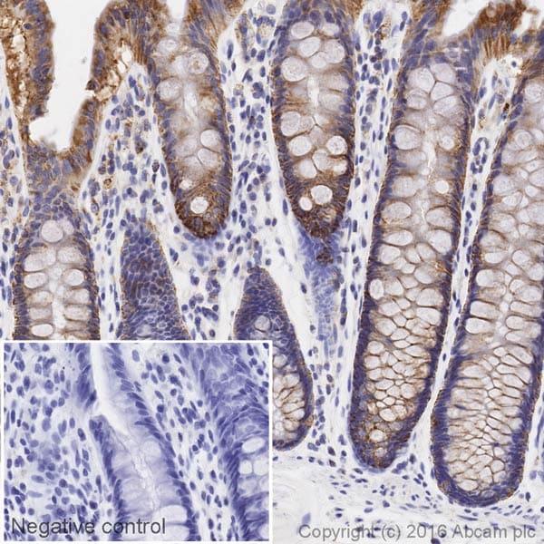 Immunohistochemistry (Formalin/PFA-fixed paraffin-embedded sections) - Anti-COX IV antibody [EPR9442(ABC)] (HRP) (ab209958)
