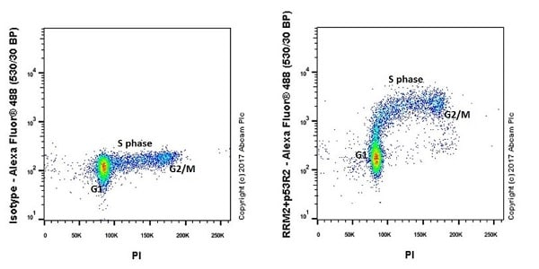Flow Cytometry - Anti-p53R2 + RRM2 antibody [EPR20651] (ab209995)
