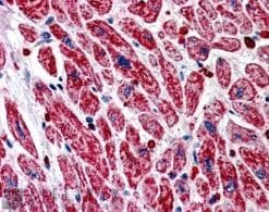 Immunohistochemistry (Formalin/PFA-fixed paraffin-embedded sections) - Anti-PITPnm 3 antibody (ab21197)