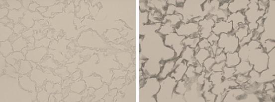 Immunohistochemistry (Formalin/PFA-fixed paraffin-embedded sections) - Anti-Elastin antibody (ab21610)