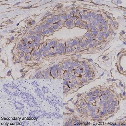 Immunohistochemistry (Formalin/PFA-fixed paraffin-embedded sections) - Anti-GNAQ antibody [EPR20978] (ab210004)