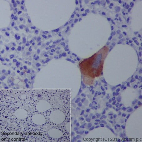 Immunohistochemistry (Formalin/PFA-fixed paraffin-embedded sections) - Anti-CD42b antibody [EPR19204] (ab210407)