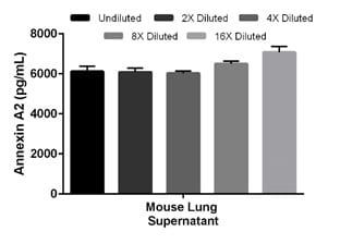Interpolated concentrations of native Annexin A2 in mouse lung day 5 cell culture supernatant sample.