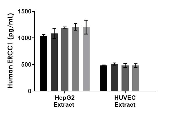 Interpolated concentrations of native ERCC1 in human lysates based on a 500 µg/mL extract load.
