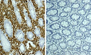 Immunohistochemistry (Formalin/PFA-fixed paraffin-embedded sections) - Rabbit IgG, monoclonal [EPR25A] - Isotype Control - BSA and Azide Free (ab210849)
