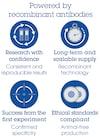 Sandwich ELISA - Human IL-1ra Matched Antibody Pair Kit (ab210888)