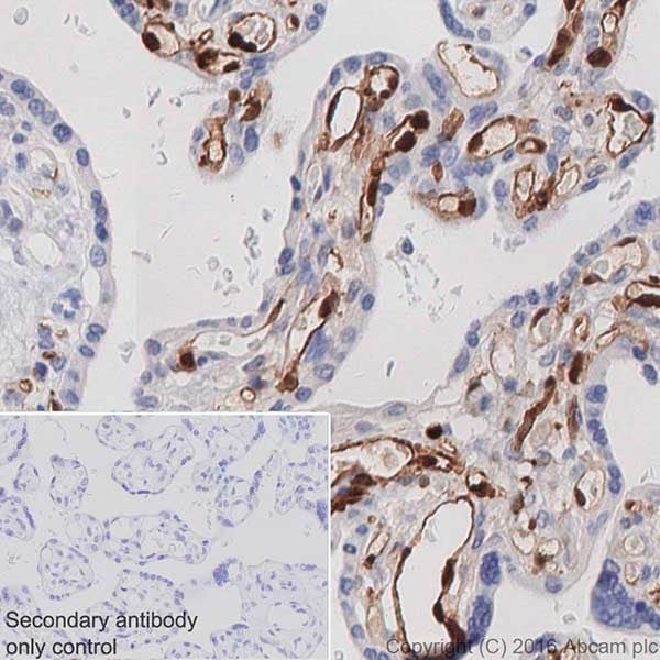 Immunohistochemistry (Formalin/PFA-fixed paraffin-embedded sections) - Anti-Indoleamine 2, 3-dioxygenase antibody [EPR20374] (ab211017)