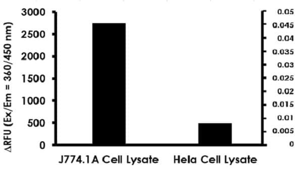 Nitric Oxide Synthase Activity Assay Kit (Fluorometric) (ab211084)
