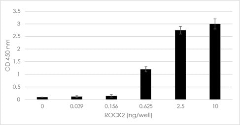 ROCK2 Activity Assay Kit (ab211175)