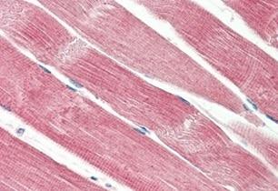 Immunohistochemistry (Formalin/PFA-fixed paraffin-embedded sections) - Anti-SOFAT antibody (ab211273)
