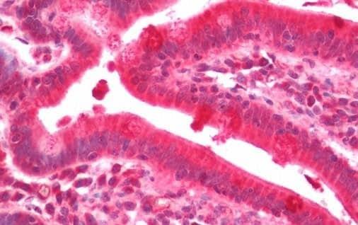 Immunohistochemistry (Formalin/PFA-fixed paraffin-embedded sections) - Anti-CDKA1 / DOC1 antibody (ab211426)