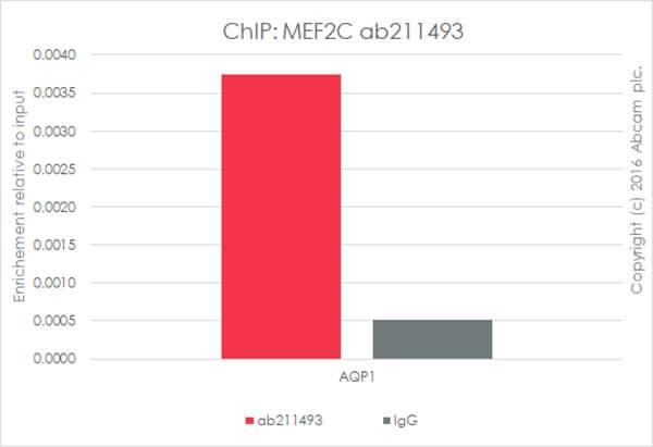 ChIP - Anti-MEF2C antibody [EPR19089-202] - ChIP Grade (ab211493)