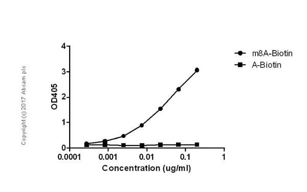 ELISA - Anti-8-methyladenosine (m8A) antibody [EPR-20836-125-1] (ab211498)