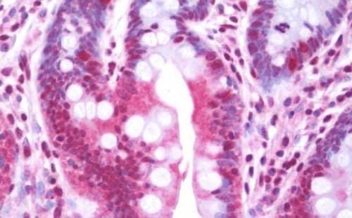 Immunohistochemistry (Formalin/PFA-fixed paraffin-embedded sections) - Anti-MAPK4 antibody (ab211501)