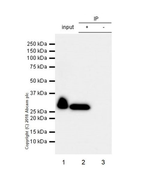 Immunoprecipitation - Anti-Mannan Binding Lectin/MBL antibody [EPR18381-83] (ab212060)