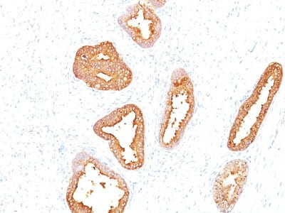 Immunohistochemistry (Formalin/PFA-fixed paraffin-embedded sections) - Anti-Prostate Specific Antigen antibody [A67-B/E3] - BSA and Azide free (ab212480)