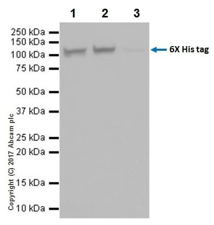 Immunoprecipitation - Anti-6X His tag® antibody [EPR20547] - ChIP Grade (ab213204)