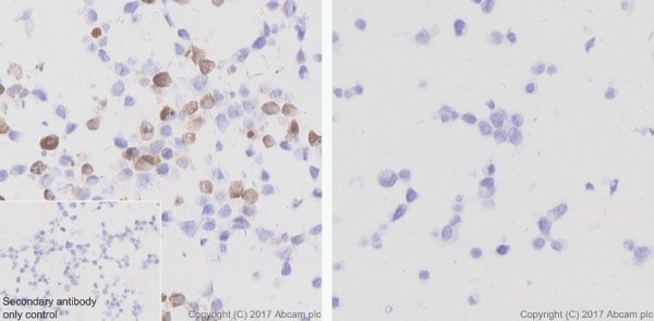 Immunohistochemistry (Formalin/PFA-fixed paraffin-embedded sections) - Anti-6X His tag® antibody [EPR20547] - ChIP Grade (ab213204)