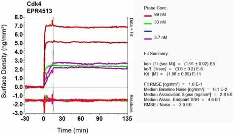Other - Anti-Cdk4 antibody [EPR4513-32-7] - BSA and Azide free (ab213216)