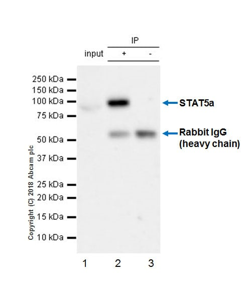 Immunoprecipitation - Anti-STAT5a antibody [E289] - BSA and Azide free (ab213219)