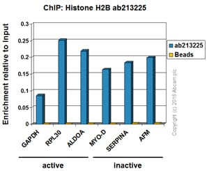 ChIP - Anti-Histone H2B antibody [IGX4228R-1] (ab213225)