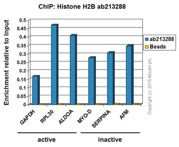 ChIP - Anti-Histone H2B antibody [IGX4228H] (ab213288)