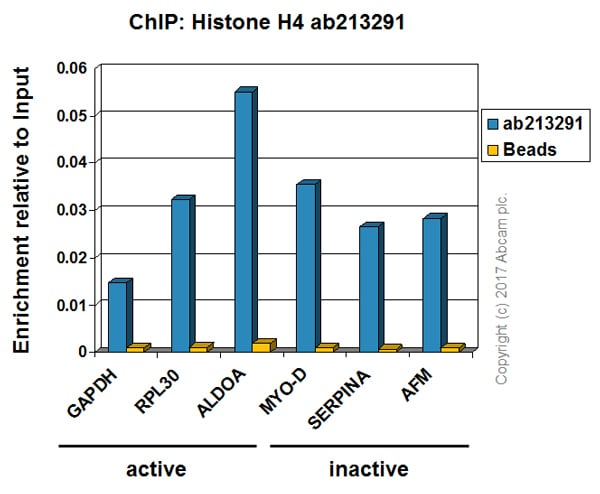 ChIP - Anti-Histone H4 antibody [IGX4696H] - ChIP Grade (ab213291)