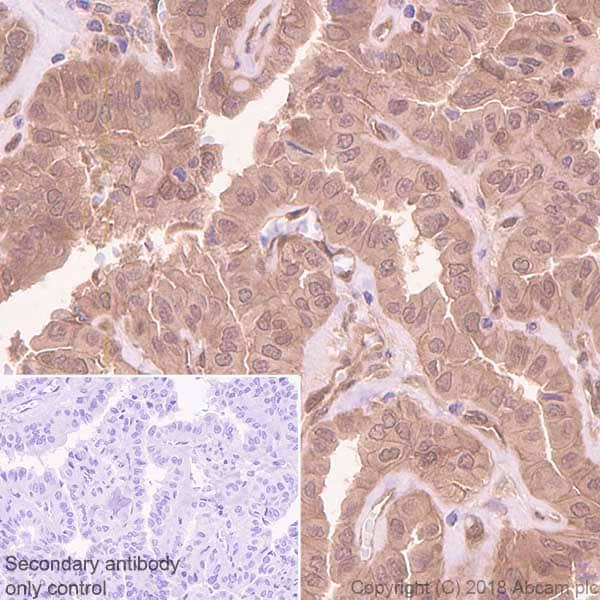Immunohistochemistry (Formalin/PFA-fixed paraffin-embedded sections) - Anti-TIP-1 antibody [EPR7900(2)] - BSA and Azide free (ab213403)
