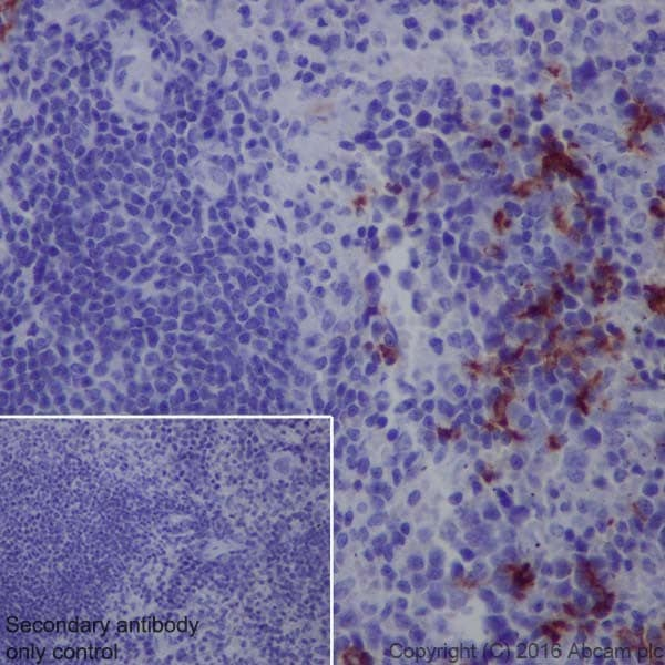 Immunohistochemistry (Formalin/PFA-fixed paraffin-embedded sections) - Anti-CD163 antibody [EPR19518] - BSA and Azide free (ab213612)